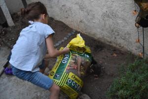 Pouring soil