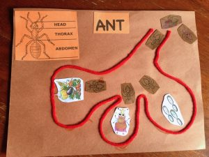 Animals in Time, Learning about ants, History for kids, Christopher Columbus