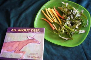 All About Deer by Jim Arnosky